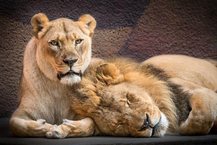 (Fonte: Zoo de Los Angeles/Reprodução)