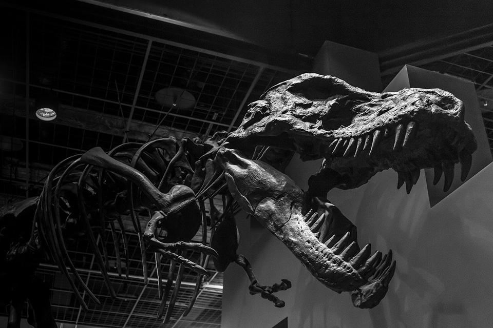 Estudo identifica primeiro caso de câncer maligno em dinossauro