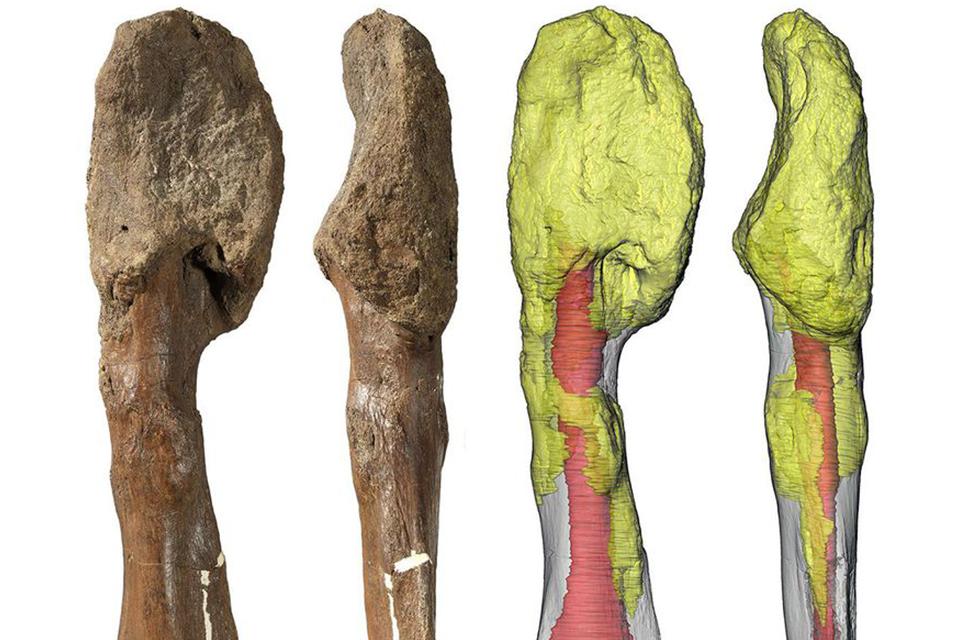 Câncer maligno encontrado em osso da perna do dinossauro com chifres, Centrosaurus