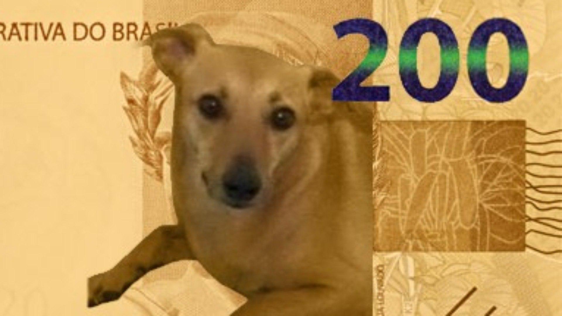 Fora da nota de R$ 200, vira-lata caramelo deve virar moeda