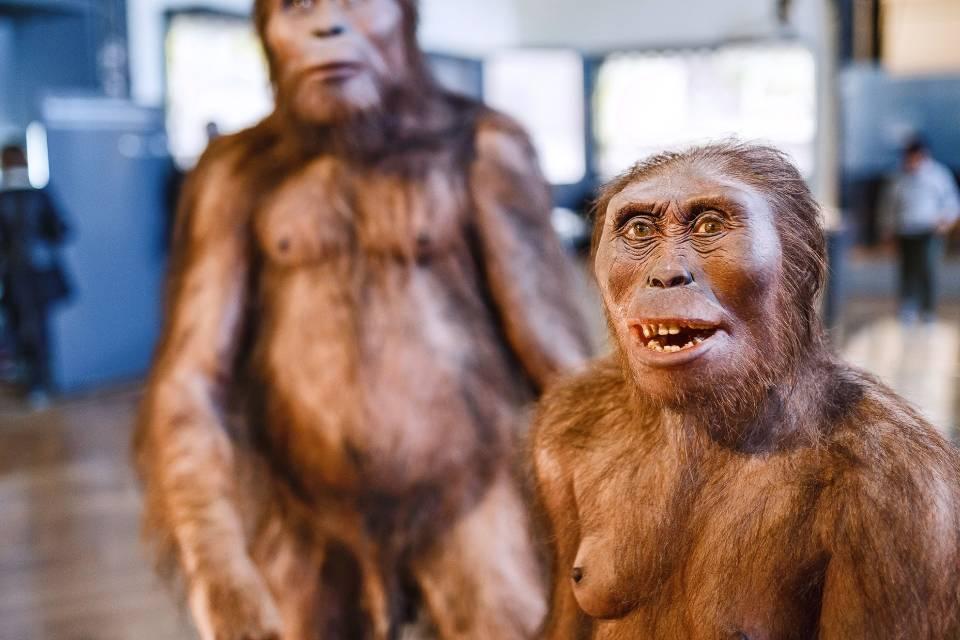 Algoritmo revela que temos DNA de ancestral desconhecido