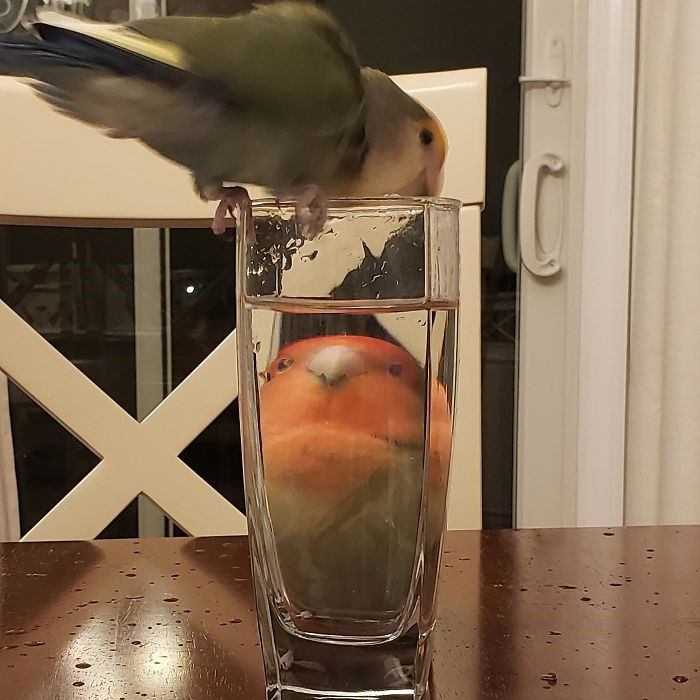 Álcool engorda (Fonte: emmyp08/Reddit - Reprodução)