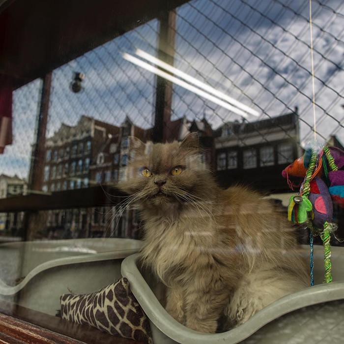 Alguns gatos moram no abrigo há muito tempo. (Fonte: @depoezenboot.amsterdam / Reprodução Instagram)