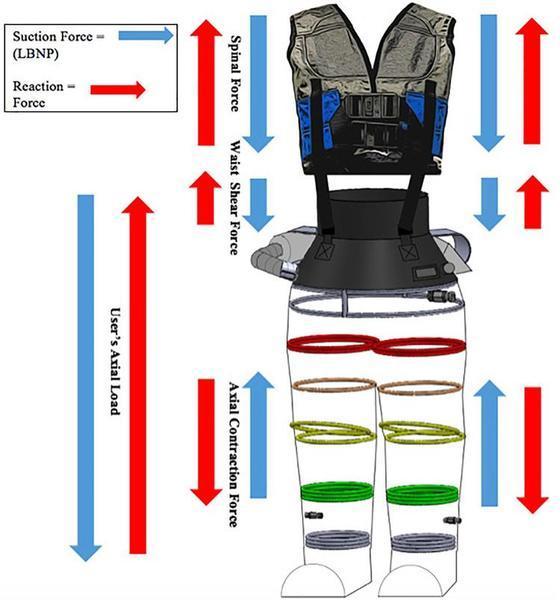 A força exercida na parte inferior melhora a circulação sanguínea e pode diminuir a perda óssea e muscular dos astronautas.