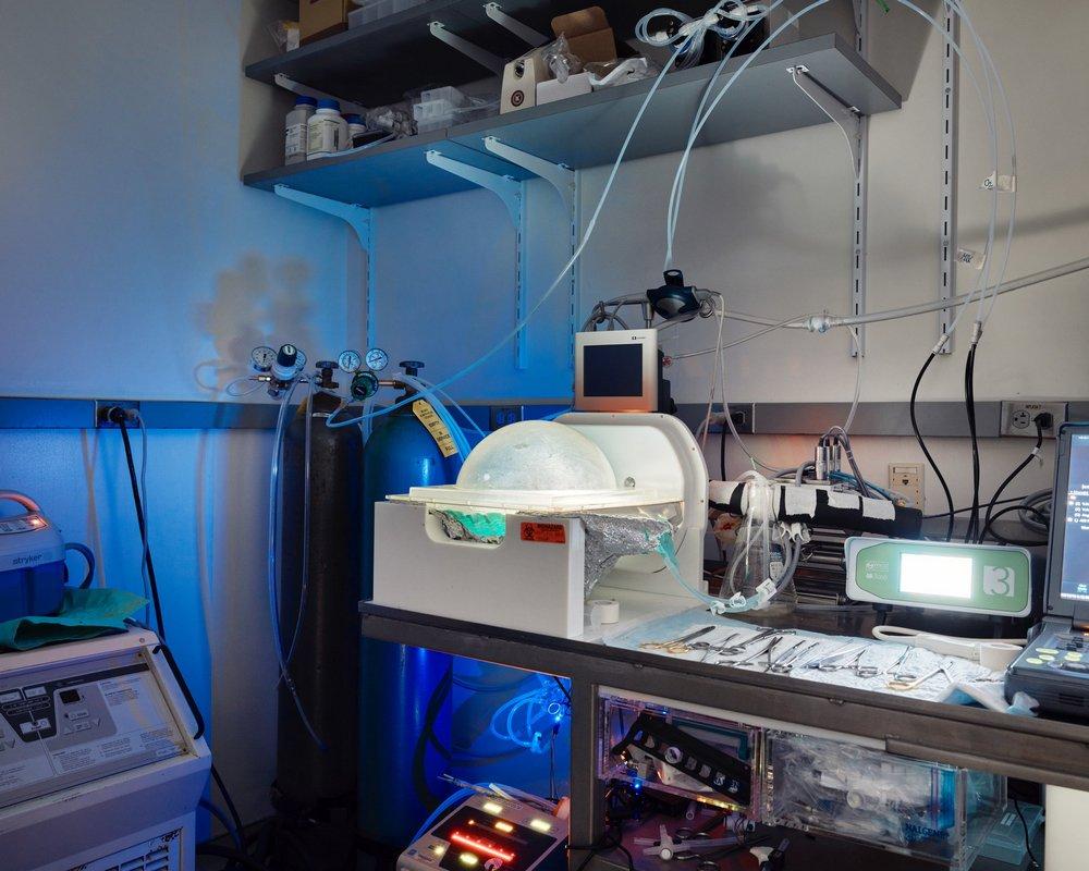 O sistema BrainEx, em Yale - dentro da câmara ao centro está um cérebro de porco.