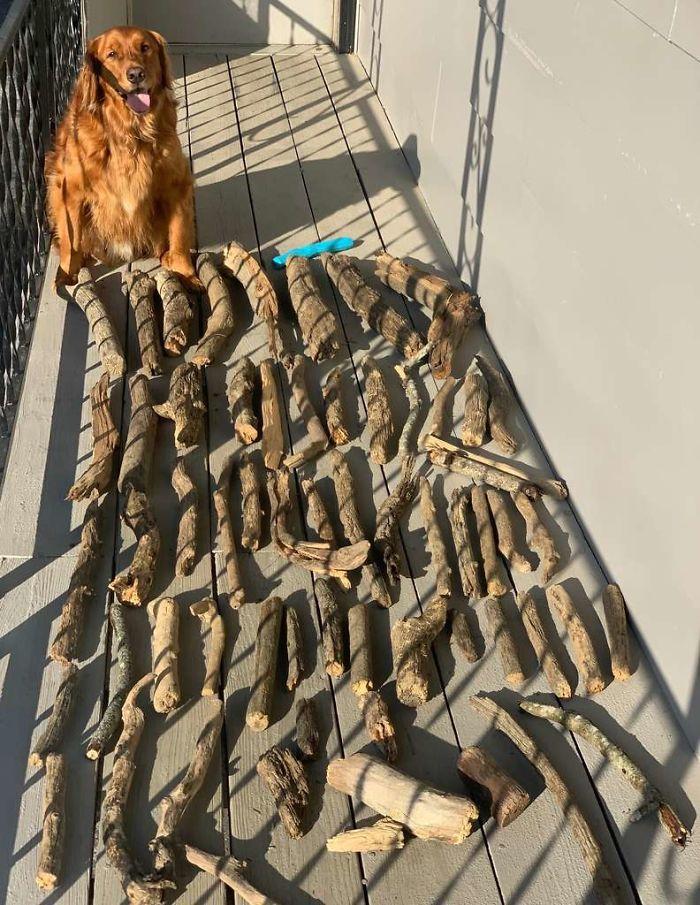 """Bruce e a enorme """"cãoleção"""" de gravetos do pet. (Fonte: leoicenhour/Reprodução)"""