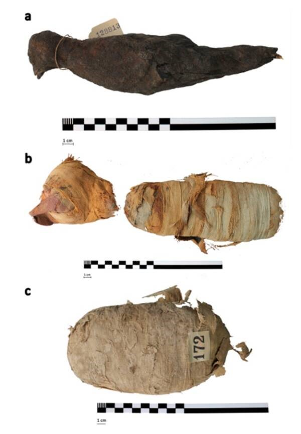 Animais mumificados. (Fonte: Swansea University via All That's Interesting)