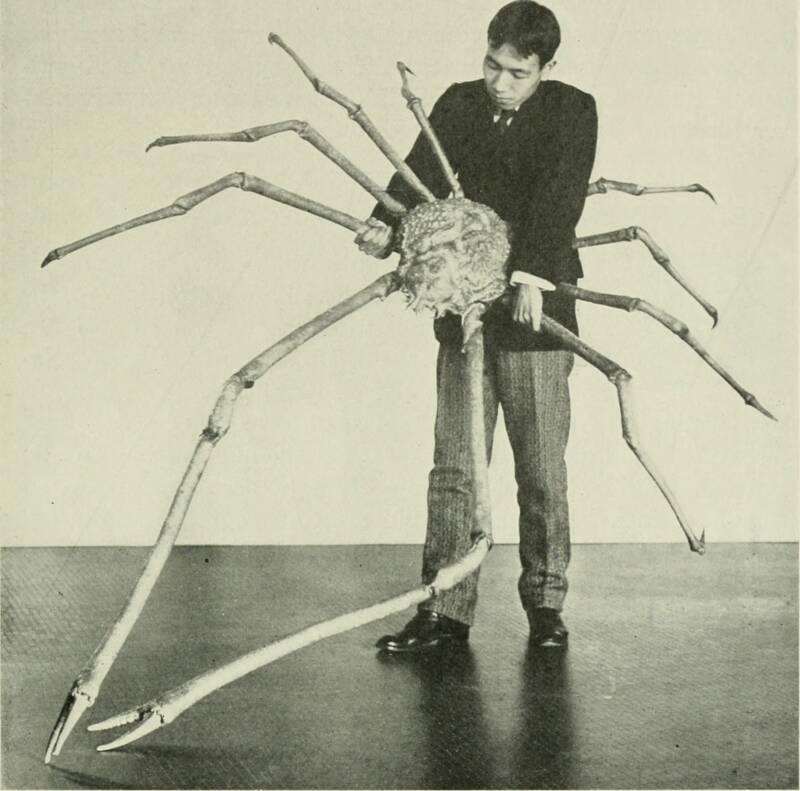 O animal sendo exibido em uma apresentação do Museu Americano de História Natural. (Fonte: Wikimedia Commons/Reprodução)
