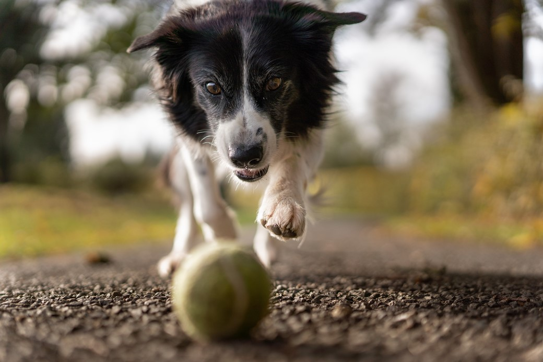 Seu cão não fica parado? Quem sabe é porque ele enxerga melhor em movimento! (Fonte: Pexels)