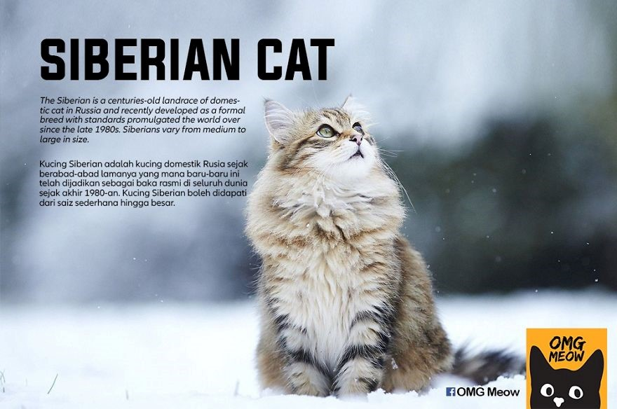 (Fonte: OMG Meow/Reprodução)