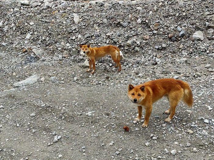 O cão não era visto na natureza há mais de 50 anos! (Fonte: Bored Panda/Reprodução)