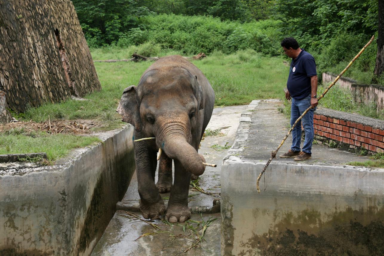 Agora, equipes de veterinários estão trabalhando com Kaavan e pretendem transferi-lo para um santuário de elefantes (Fonte: NY Post/Reprodução)