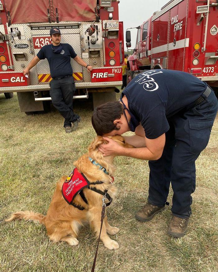 A cachorrinha passeia pelas bases do corpo de bombeiros, dando carinho a todos (Fonte: @kerith_the_golden_retriever/Instagram)