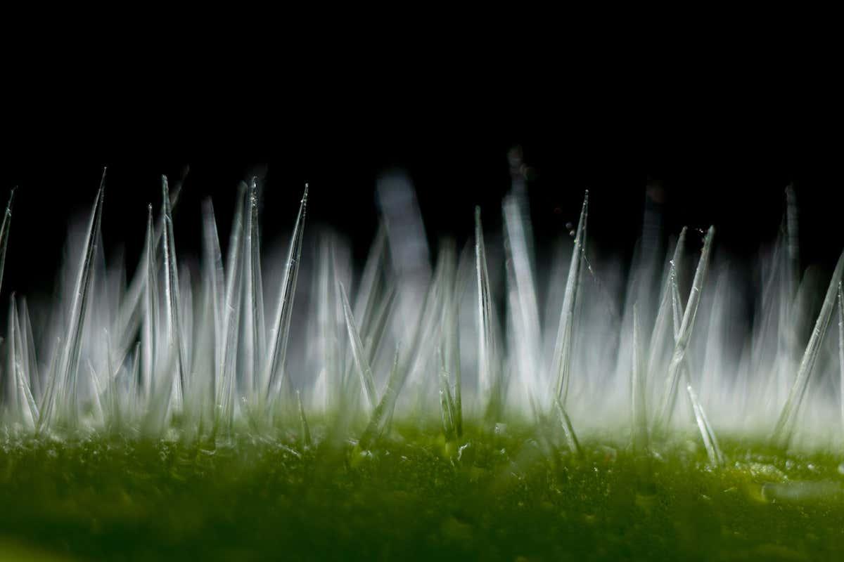 Fonte: Nature Picture Library / Alamy/Reprodução