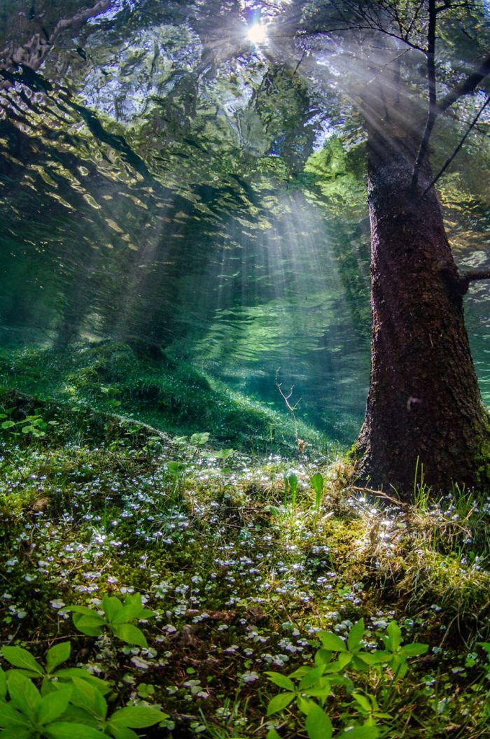 Fonte: Martin Strmiska / 2020 Through Your Lens Underwater Photo Contest