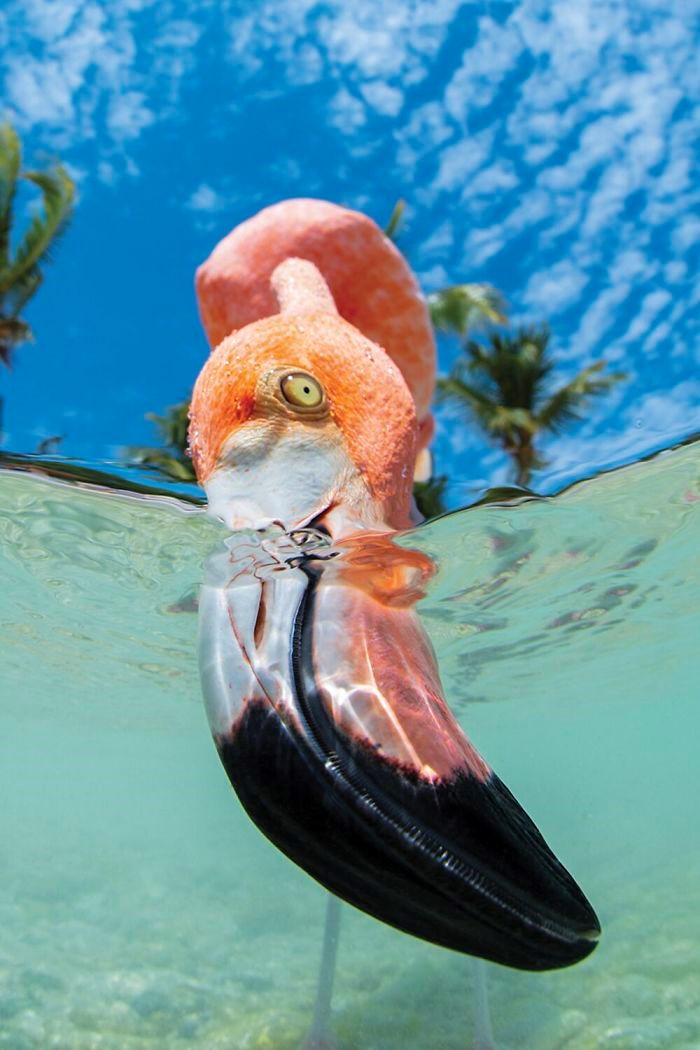 Fonte: Chris Gug / 2020 Through Your Lens Underwater Photo Contest