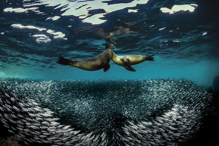 Fonte: Raffaele Livornese / 2020 Through Your Lens Underwater Photo Contest