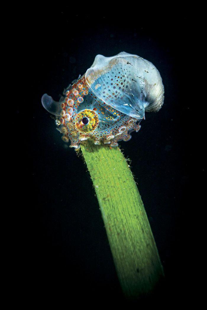 Fonte: Tobias Friedrich / 2020 Through Your Lens Underwater Photo Contest