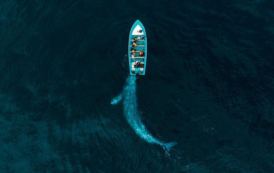 (Fonte: Joseph Cheires/Drone Photo Awards)