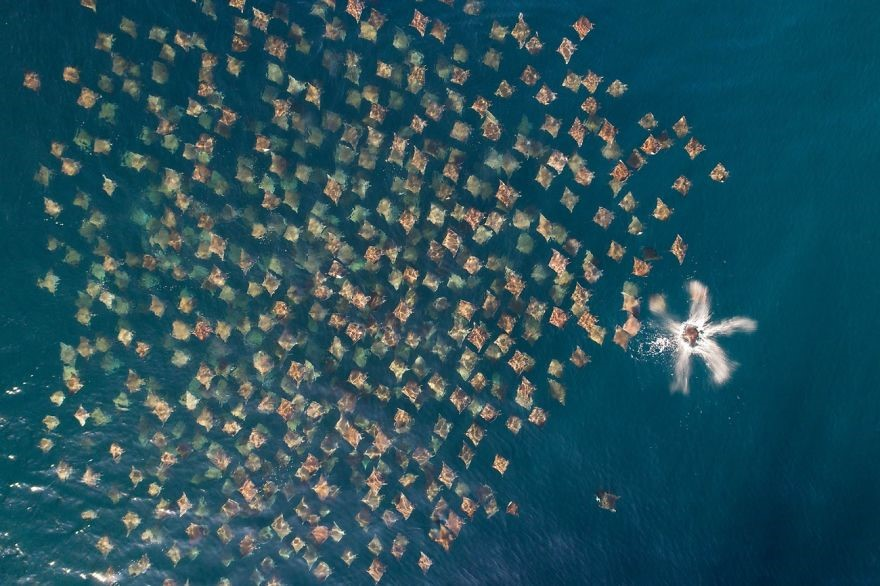 (Fonte: Mark Carwardine/Drone Photo Awards)