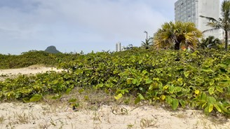 Restingas and mangroves are threatened.