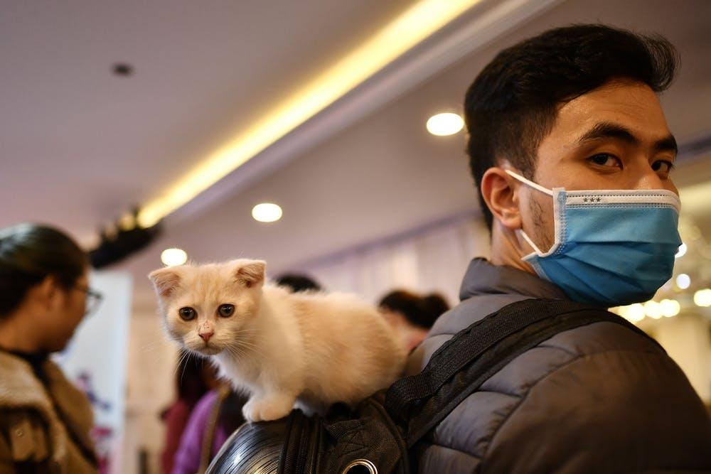 É improvável que gatos transmitam o coronavírus para seres humanos (Fonte: Manan Vatsyayana /AFP/Reprodução)