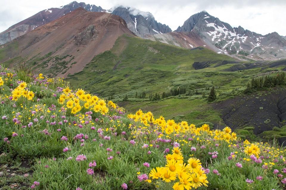 As flores mudaram sua pigmentação por causa das mudanças do clima