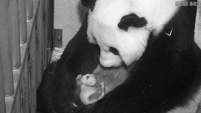(Fonte: Smithsonian's National Zoo/Reprodução)