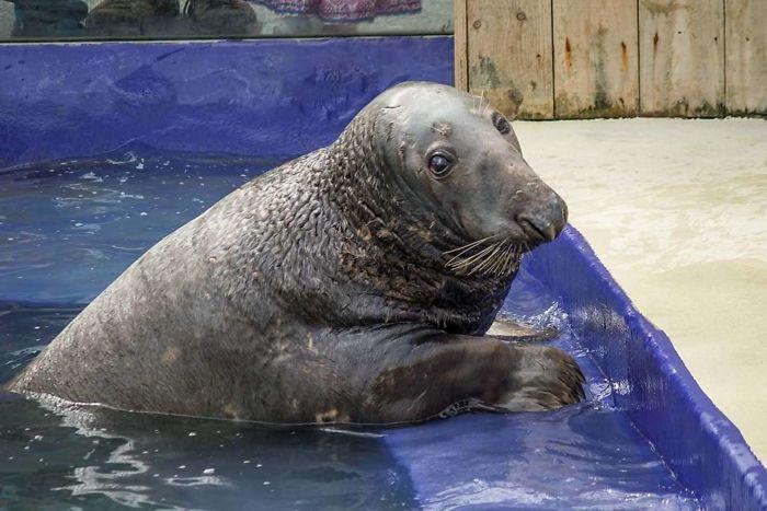 (Fonte: Cornish Seal Sanctuary)