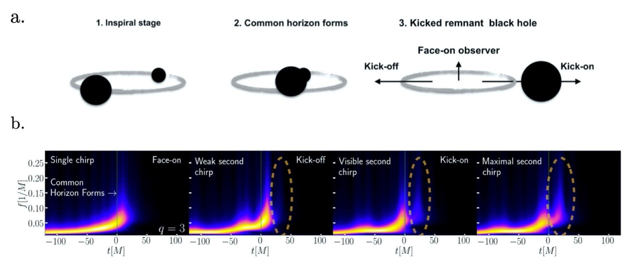 Buracos negros resultantes de colisões de outros geram mais que uma única onda gravitacional.