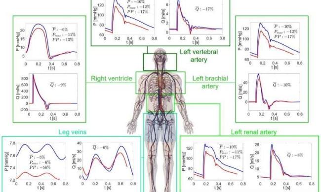 O estudo comparou as condições fisiológicas em gravidade zero e na Terra.