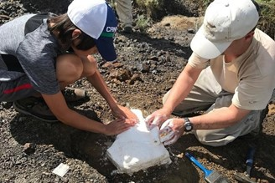 Nathan (à esquerda) ajuda o paleontólogo François Therrien (À direita) a envolver os ossos em capas protetoras de estopa e gesso.