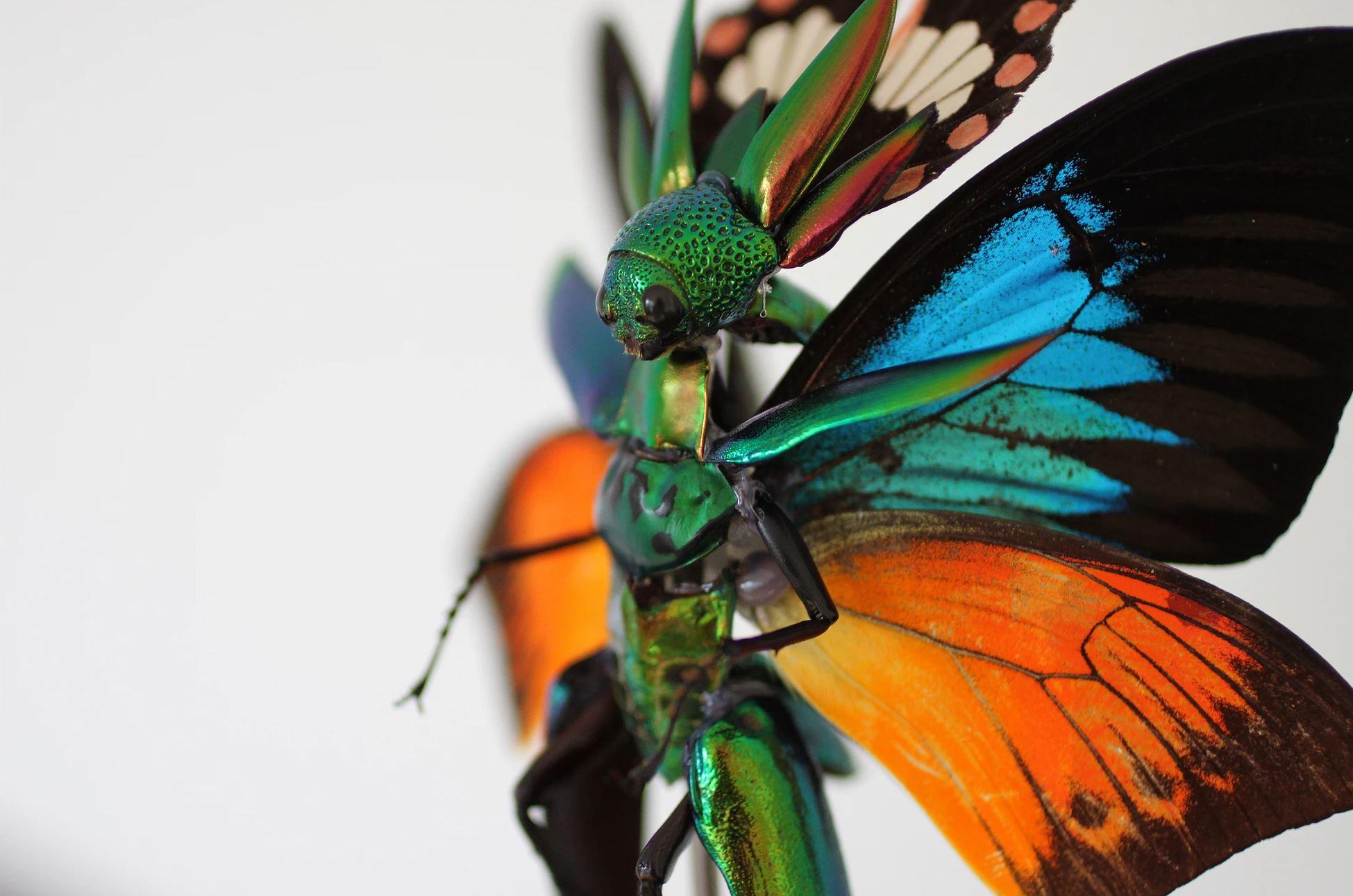 Fada feita com partes de insetos