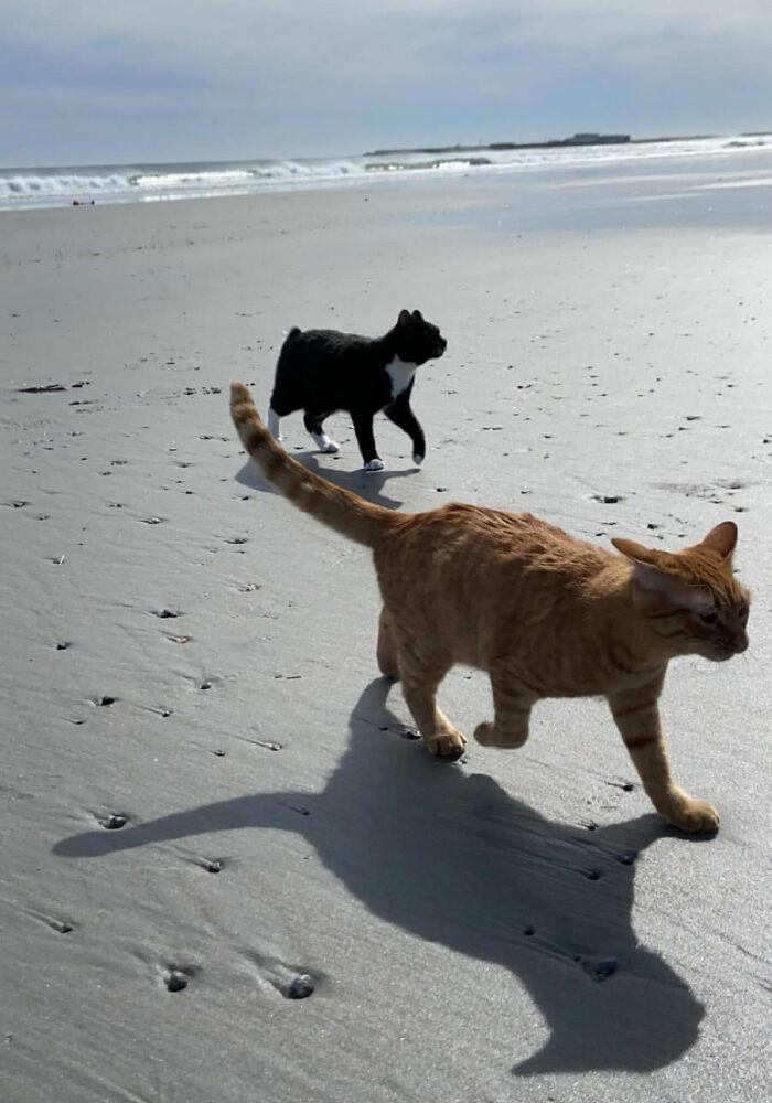 (Fonte: Pumpkin the Cat)