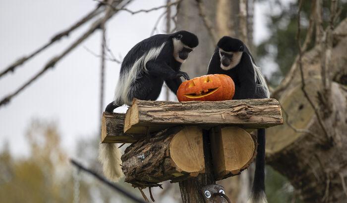 (Fonte: Pairi Daiza Animal Park/Reprodução)