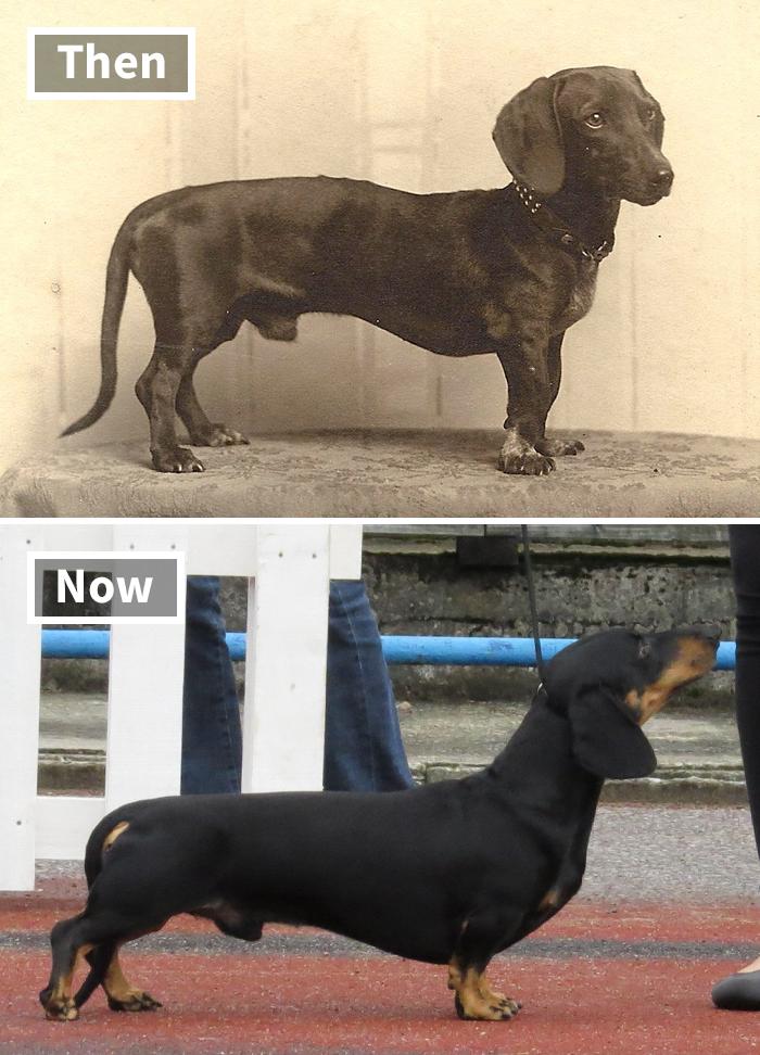 Fonte: Dogs of All Nations/Reprodução