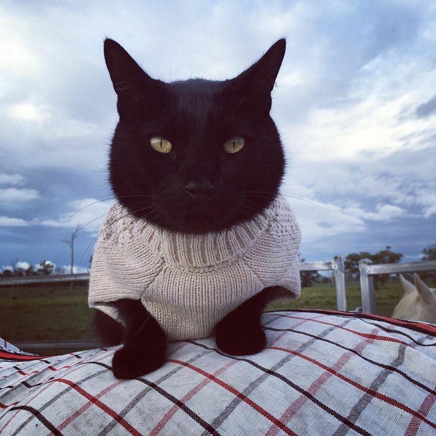 O gatinho Morris