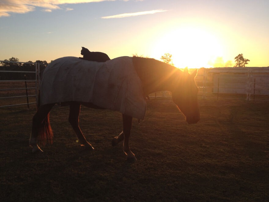A dupla gosta de apreciar o pôr do sol