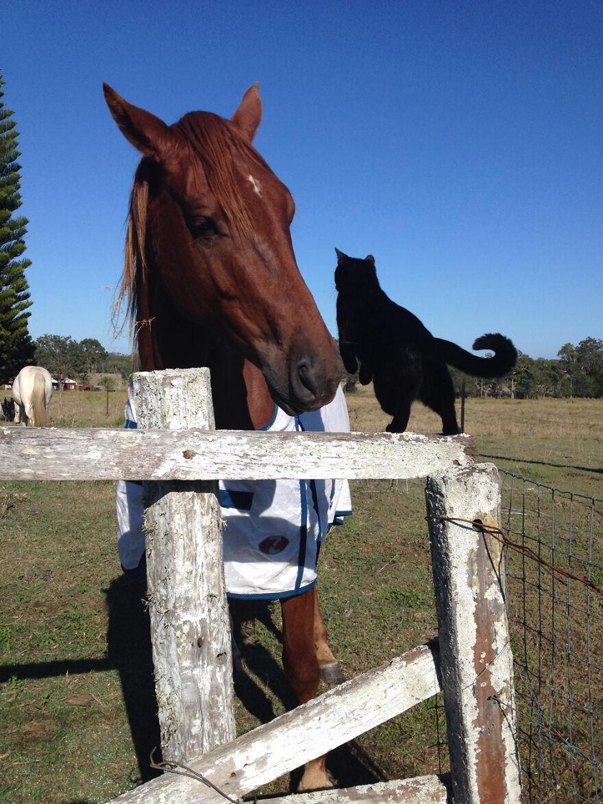 Morris mostrando que está pronto para dar uma volta com Champy
