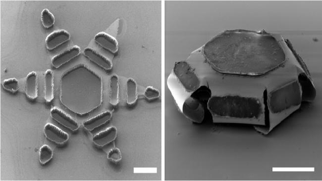 Microdispositivo libera medicamento no intestino gradualmente