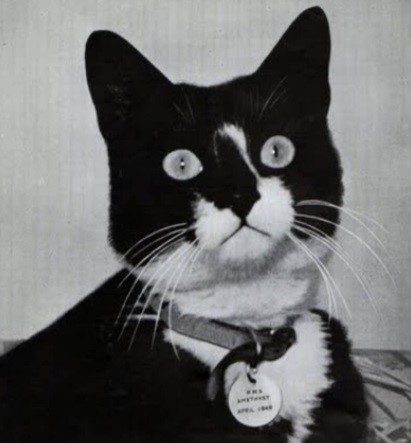O gato da imagem é Simon, e não Oscar/Sam. Porém, muitas páginas confundem os gatos.