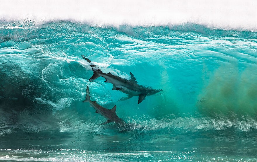 (Fonte: Sean Scott/The Ocean Photography Awards)