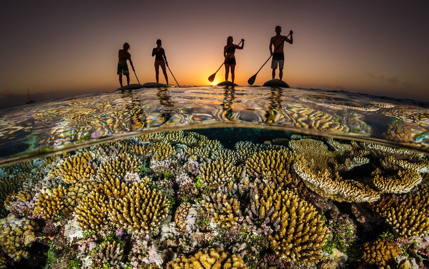 (Fonte: Grant Thomas/The Ocean Photography Awards)