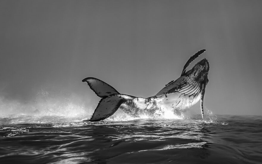 (Fonte: Jono Allen/The Ocean Photography Awards)