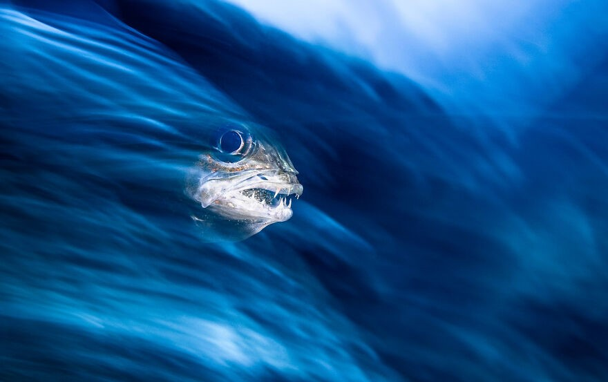 (Fonte: Henley Spiers/The Ocean Photography Awards)