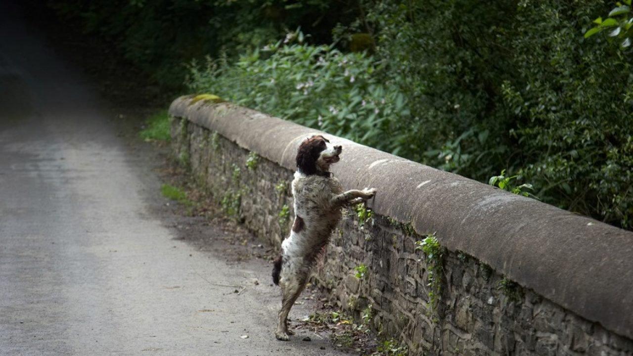 (Fonte: Dog Time/Reprodução)
