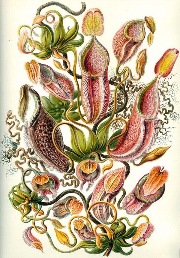 (Fonte: Wikimedia Commons/Reprodução)