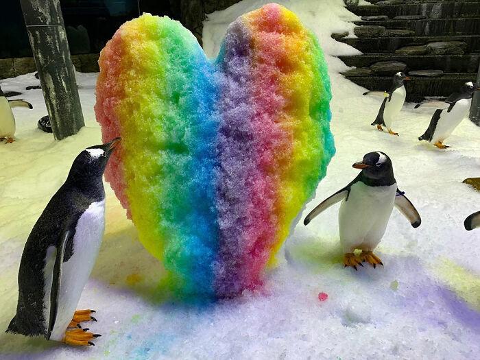 Um coração de arco-íris para o casal mais fofo do aquário