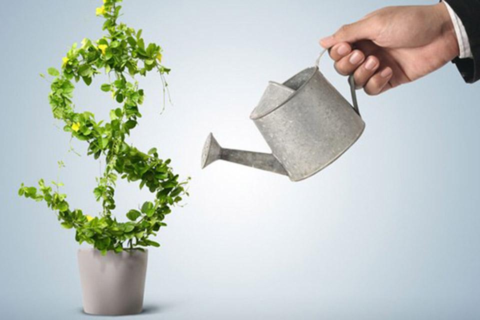 83% das startups brasileiras apoiam desenvolvimento sustentável