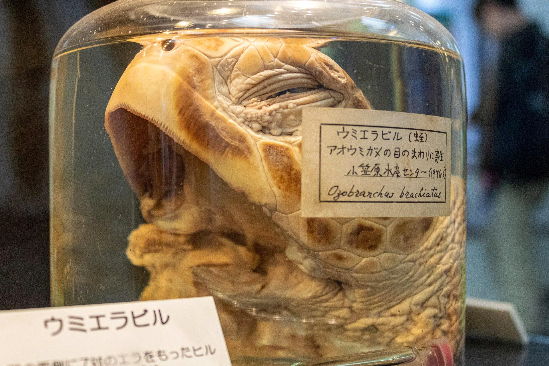Fonte: Meguro Parasitological Museum/Reprodução